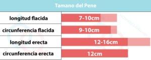 Tamaño del pene - longitud, circunferencia